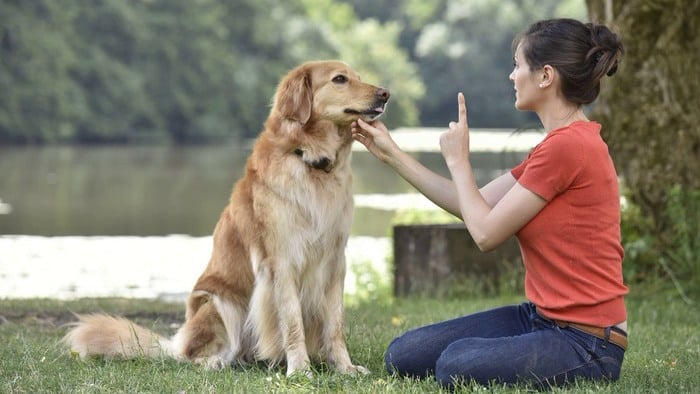 Why Your Dog Sometimes Forgets His Training, and What You Can Do About It