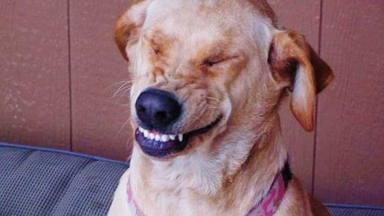 Dog Breath Fresheners