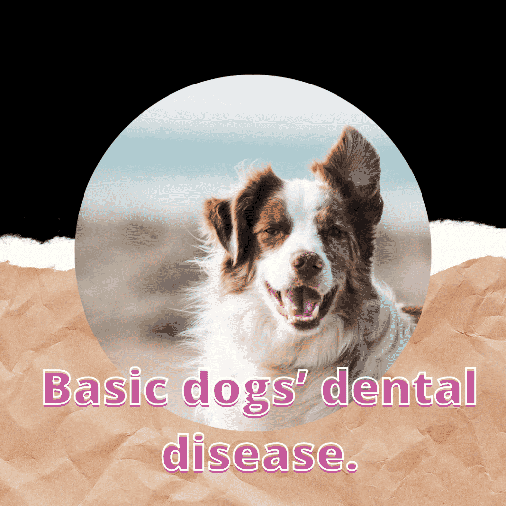 Basic dog's dental disease
