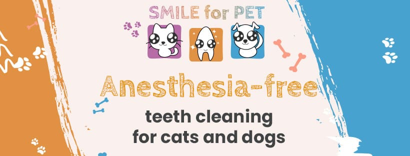 Anesthesia-Free teeth clening for grooming Salons